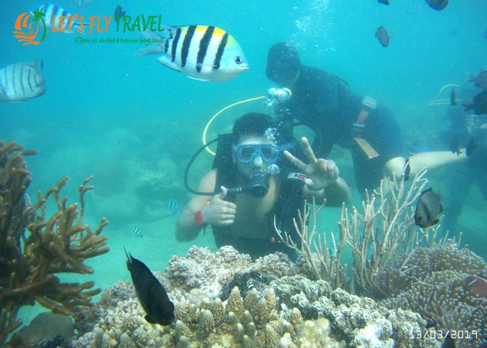 Lặn ngắm san hô cùng tour đảo Hòn Mun