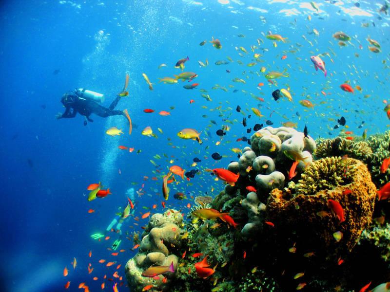 hệ sinh thái biển nha trang