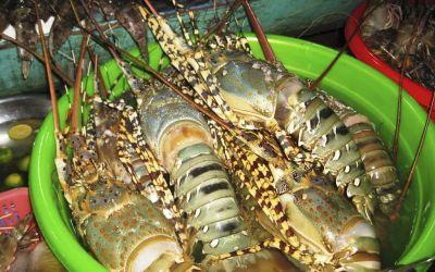Kinh nghiệm mua hải sản tươi Nha Trang không lo bị chặt chém